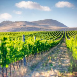 Cape Town Wine Estate